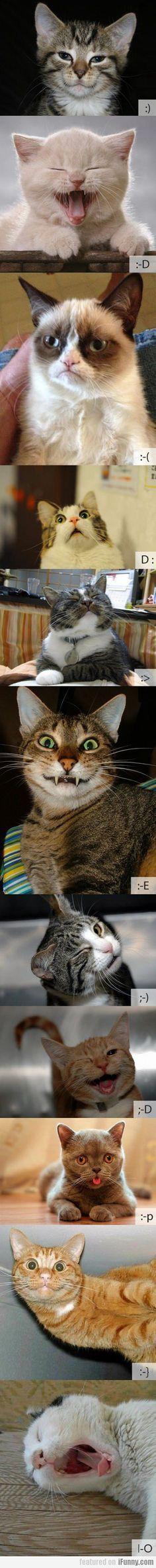 Cat Emoticons, bahahaha!
