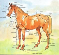 Drawing and painting - video How to learn to draw and paint a . Drawing and painting - video Horse Sketch, Horse Anatomy, Horse Facts, Illustration Techniques, Horse Drawings, Painting Videos, Horse Breeds, Horseback Riding, Horse Riding