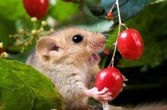 Cute Little Animals, Cute Funny Animals, Funny Animal Pictures, Cute Pictures, Garden Animals, Nature Animals, Animals And Pets, Hamsters, Rodents