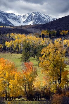 Fall in Colorado; photo by Dave Mills