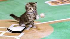 Im-paws-ibly cute: Kittens to play baseball on TV in 'Paw Star Game'