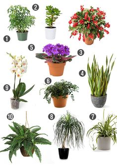 Heymama looks at non-toxic indoor plants. Green plants are natural air detoxifiers, purifying the air inside your home while doing wonders for your decor.