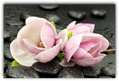 Learn Natural Meditation and Experience Instant Peace Meditation Benefits, Daily Meditation, Succulents, Peace, Learning, Rose, Nature, Flowers, Plants