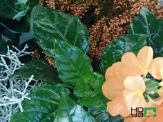 http://www.hoya.sk/rady-a-tipy/1433-competition-qflower-lovers-grow-enjoy-it-share-and-winq