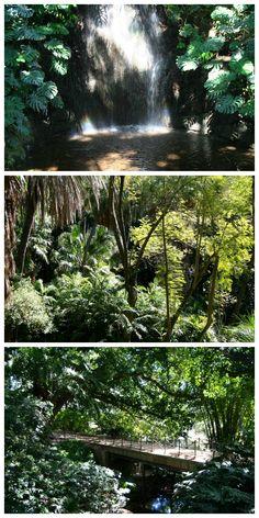 """Jardín Botánico - Histórico """"La Concepción""""  - Málaga 2011"""