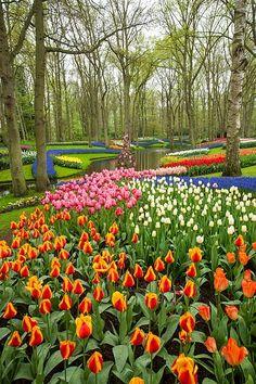 A field of tulips!! : Keukenhof Gardens