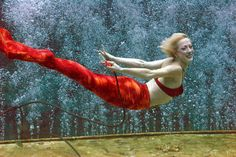 Love mermaids? See them swim at Adventure Aquarium in Camden | NJ.com