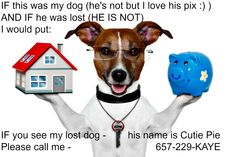 Is your dog lost? Tips to find a lost puppy dog online and off in Roseville Sacramento area and beyond.