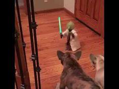 Yoda faces danger on earth