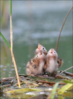 3 little birds Pretty Birds, Love Birds, Beautiful Birds, Animals Beautiful, Cute Baby Animals, Animals And Pets, Tier Fotos, Little Birds, Small Birds