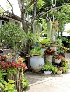 จัดสวนในพื้นที่จำกัด Tropical Garden Design, Tropical Landscaping, Backyard Landscaping, Small Space Gardening, Garden Spaces, Garden Planters, Green Landscape, Landscape Design, Amazing Gardens