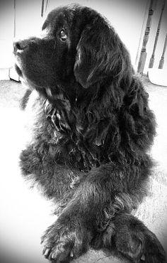 My Hughmongil (Hugie), always sat w/ his front legs crossed.... He was a Prince!