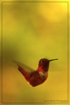 Hummingbird in Motion! #wordpress #photography