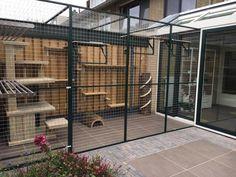 Diy Cat Enclosure, Outdoor Cat Enclosure, Cat Cages Indoor, Cats Outside, Cat Kennel, Cat House Diy, Cat Run, Dog Hotel, Cat Playground