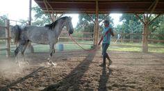 Doma de escudo caballo lusitano Horses, Natural, Animals, Coat Of Arms, Animales, Animaux, Horse, Animal, Animais