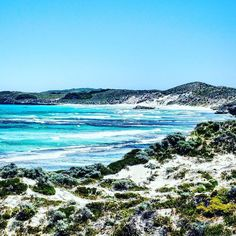 Wishing I was back at Rottnest today!  nothing at all to do with a very sore head from celebrating Australia Day and the fear of work......  #rottnestisland #Rottnest #perthsummer #perth_gram #Rotto #AustraliaDay #dreamingofournextadventure #amazing_australia_7 #wa #westernaustralia #island #blue #sea #waves #50shadesofblue #summer by amie_mcc http://ift.tt/1L5GqLp