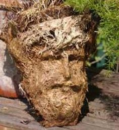 The 20 Strangest Jesus Images In Objects    Here is one found in plant roots.