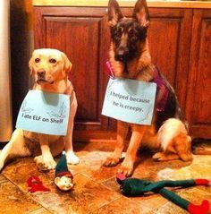 Best Elf on the Shelf /  Dog shaming yet!