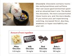 Do you know which type of chocolate is most toxic for pets? The darker and more bitter the chocolate, the greater the danger for dogs.