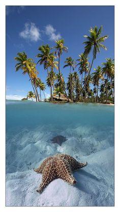 étoile de mer à tahiti