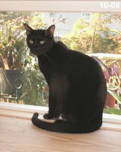 melanistic bengal cat #whydocatmeow - Catsincare.com!