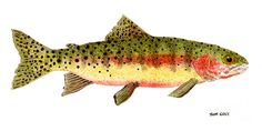 trout paintings - Google Search