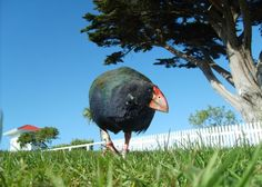 Tiritiri Matangi Island (Auckland, New Zealand): Address, Tickets & Tours, Nature & Wildlife Area Reviews - TripAdvisor