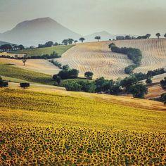 "@larsenio's photo: ""#instago #instagramers #igerspescara #igers #instadaily #ipopyou #instagramhub #instamood #insta_sleep #igersitalia #ig_daily #igersmarche #instagood #gf_italy #golosidifuturo #gang_family #GCS #marche #sunset #sunflowers"""