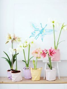 Bol op pot voor binnen! Haal het voorjaar in huis. #lente #planten #mwpd