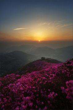 colorful sunset (photography, photo, picture, image, beautiful, amazing, travel, world, places, nature, landscape, flowers)