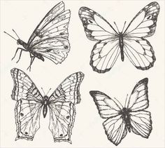 9+ Butterfly Illustrations - Free & Premium Templates | Free & Premium Templates Butterfly Sketch, Butterfly Outline, Butterfly Illustration, Insect Crafts, Insect Art, Bee Outline, Art Sketches, Art Drawings, Insect Activities
