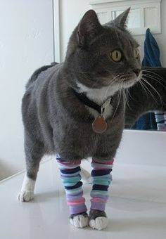 Forget kitten mittens, it's all about leg warmers. Totally making these for my little kitty.