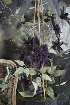 Simply Creative: Porcelain Flowers of Vladimir Kanevsky Black Garden, Love Garden, Dream Garden, Black Flowers, Exotic Flowers, Beautiful Flowers, Rare Flowers, Garden Inspiration, Painting Inspiration