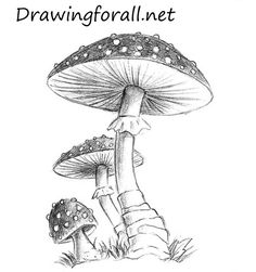 How to Draw a Mushroom | Drawingforall.net
