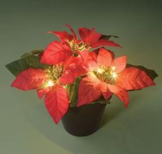 Poinsettia Planter @ Harriet Carter