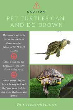 TurtleHolic: Clear, Simplified, How-To Guides for Pet Turtle Owners Aquatic Turtle Habitat, Aquatic Turtle Tank, Box Turtle Habitat, Turtle Aquarium, Aquatic Turtles, Yellow Bellied Slider, Red Eared Slider Turtle, Pet Turtle Care, Red Ear Turtle
