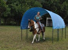 Extreme+Trail+Riding+Obstacles   My trainer, Terri Lindley on her EMM mustang, He's All the Rage: