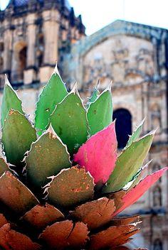 Iglesia Santo Domingo, Oaxaca; Oaxaca Hace tantos años que fui...