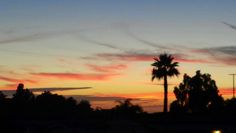 San Marcos, CA sunset with a palm. ..amazing!