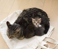 This could quite possibly be the cutest cat pic you'll see today…