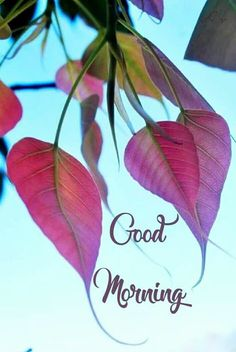 Good Morning Flowers Pictures, Good Morning Friends Images, Good Morning Beautiful Pictures, Good Night Flowers, Good Morning Nature, Good Morning Cards, Good Morning Beautiful Images, Good Morning Images Download, Cute Good Morning