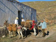 """Rodando un cortometraje con nuestros burros en Almería - Shooting a   short film with our donkeys in Almería.     Cortesía de """"El arriero""""   Sierra Nevada, Cortijo Fuente de los Berros - Güéjar Sierra, Granada   (España). elarriero.es"""