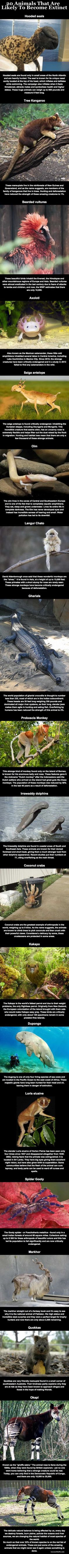 20 Animals That Are Likely To Become Extinct animals nature animal interesting wild life facts wild animals