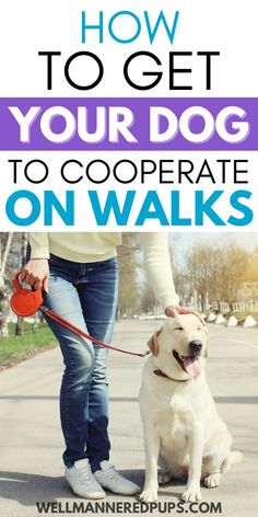 Is your dog not cooperating with you on walks? Try these walking tips!