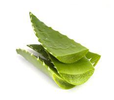 Aloe vera gel dapat ditemukan pada produk yang dibeli di toko obat. Bisa juga dipanen langsung dari dalam daun tanaman lidah buaya. Menurut Klinik Cleveland, lidah buaya memiliki khasiat antiinflamasi yang diketahui efektif dalam mengobati kondisi kulit inflamasi. Namun, Anda sebaiknya hanya menggunakan gel aloe vera murni pada wasir.