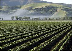 Salinas Valley, CA, the overall main setting of John Steinbecks novel, East of Eden. This area in California is where the Hamilton family lives, starting off with Samuel. Later on Adam will move here and raise his two sons Cal and Aron. The time period of this is the late 1800's, early 1900's.