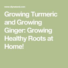 Growing Turmeric and Growing Ginger: Growing Healthy Roots at Home!