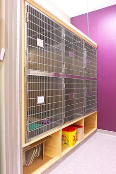 Feline ward | Hospital Design