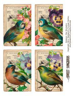 Ephemera's Vintage Garden: Free Printable - Songbirds Journaling Cards