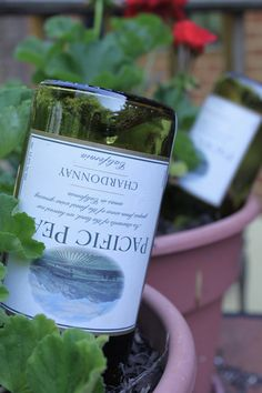 use empty wine bottles (who doesn't have these lying around) to water your plants in summer